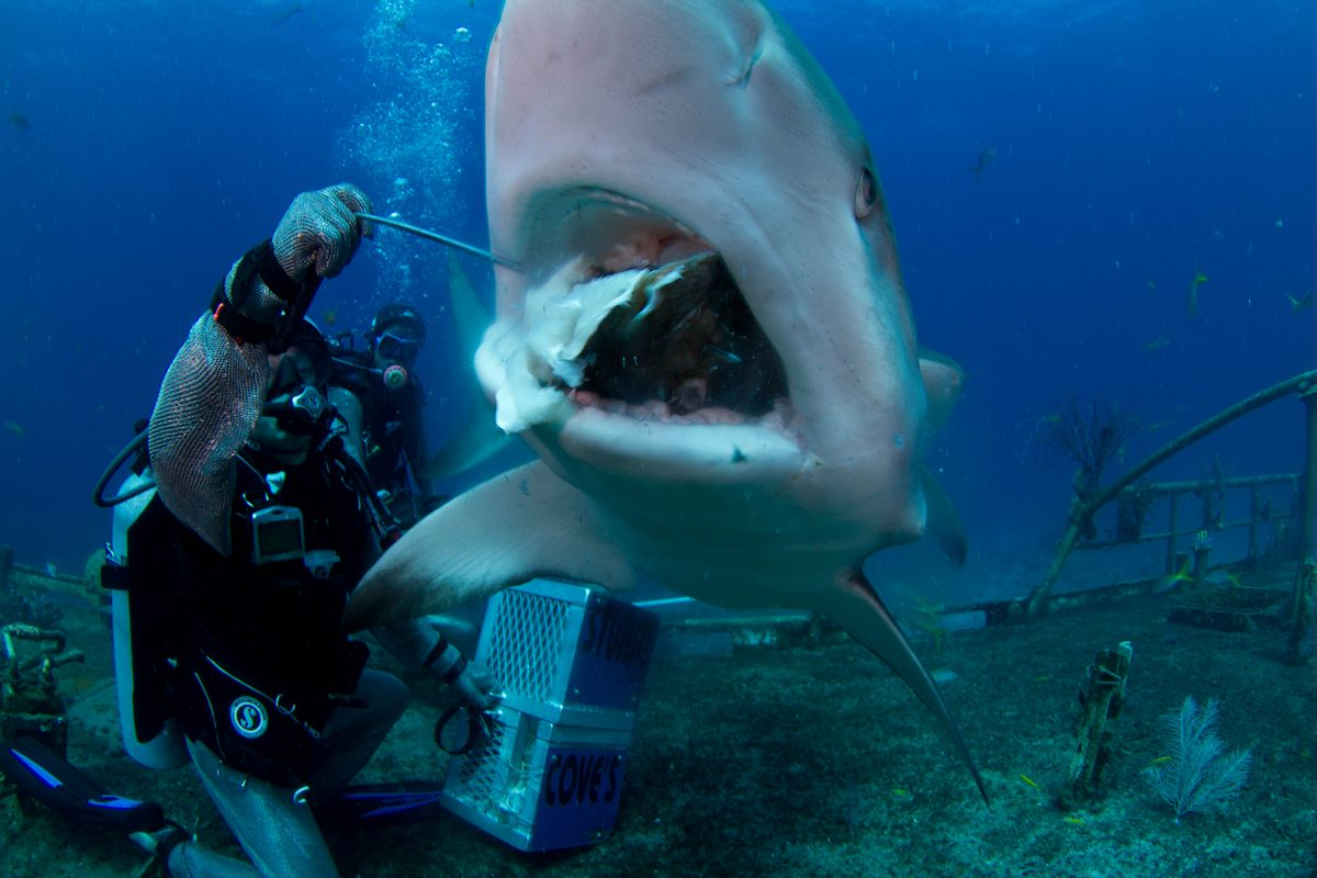 Fall Cape Cod Wallpaper Shark Encounters For Your Next Vacation Swim Feed Or