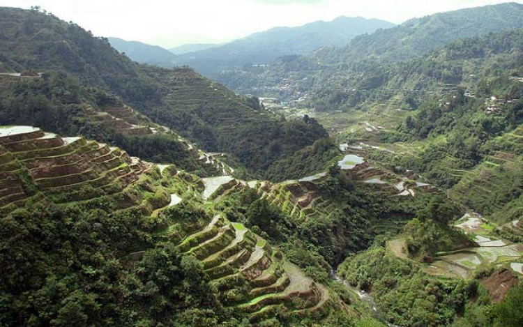 banaue rice terraces (3)