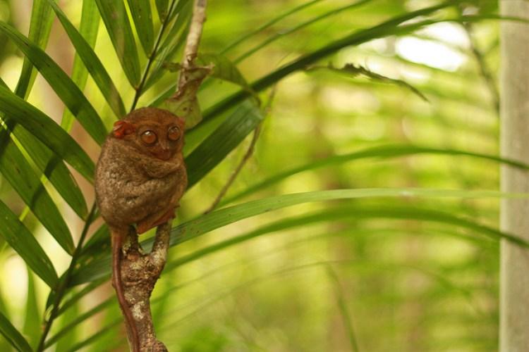 Tourist Spots in Bohol Philippine Tarsier and Wildlife Sanctuary Bohol