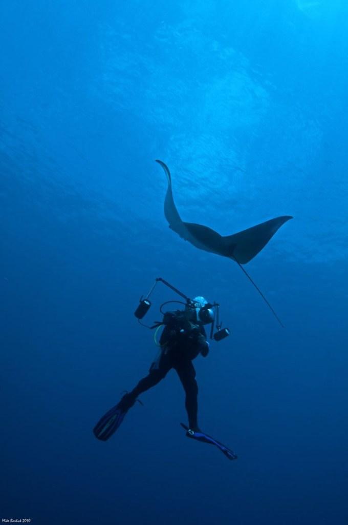 Ticao Pass Diving