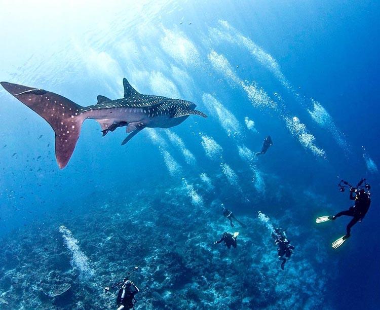 Tubbataha Reef Diving