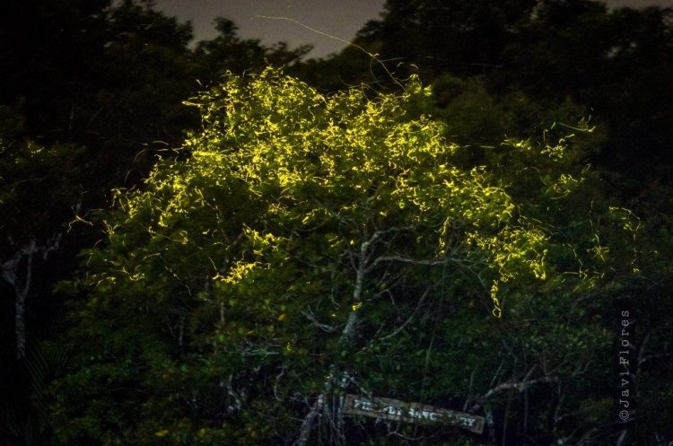 Abatan-River-Fireflies-1024x678