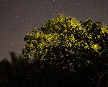 Unbelievable Glowing in the Dark Tree in Bohol