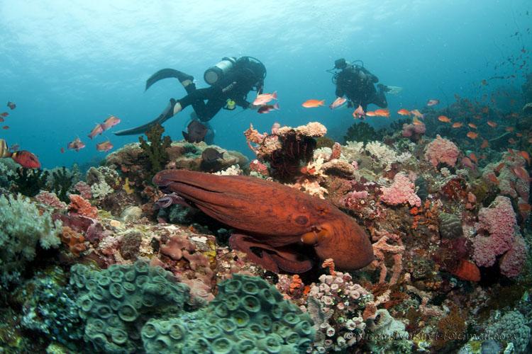 Anilao Dive Sites Batangas