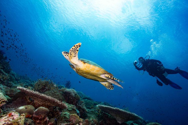 Napantao Marine Sanctuary Southern Leyte