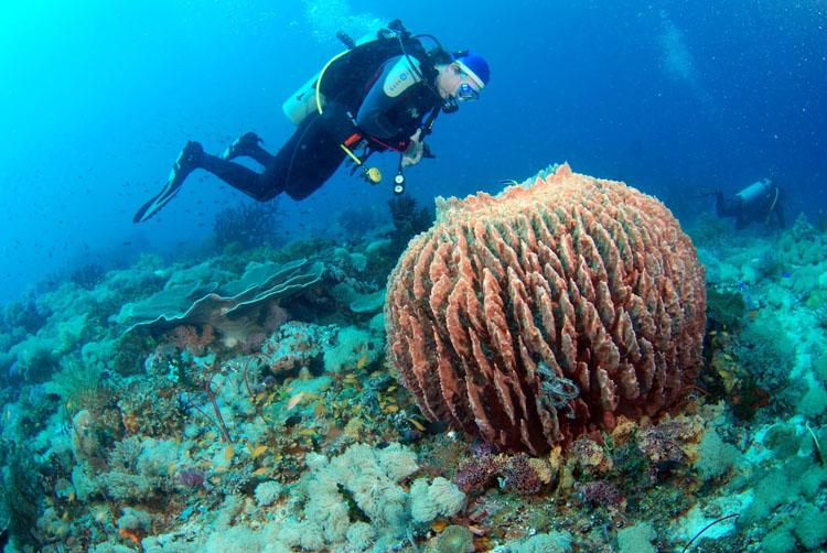 Sun-ok Fish Sanctuary Southern Leyte