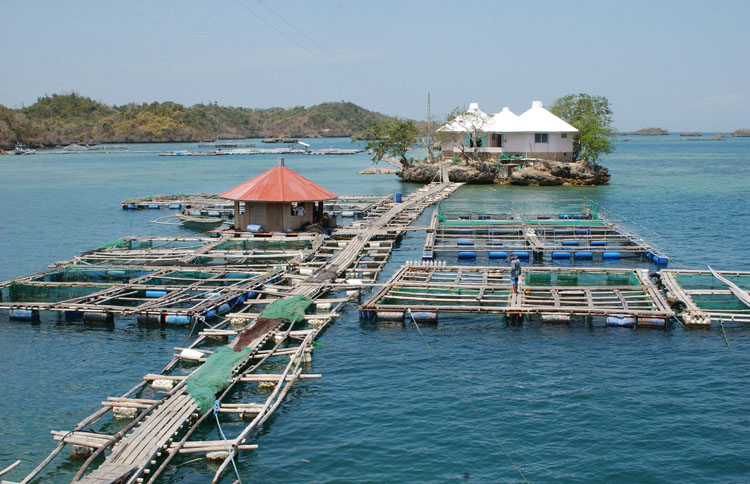 Southeast Asian Fisheries Development Center Guimaras