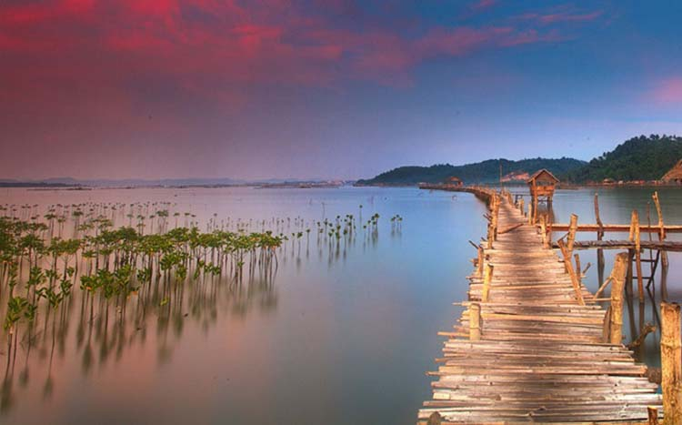 Pawa Mangrove Park
