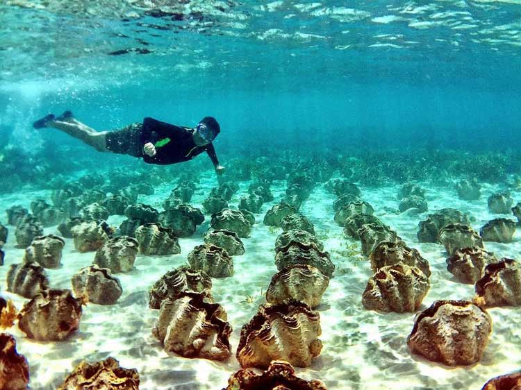 4. Giant Clam Sanctuary
