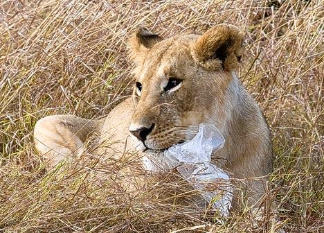 Photo Courtesy of www.dailymail.co.uk
