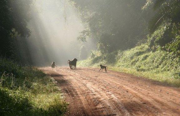 kibale-forest-national-park