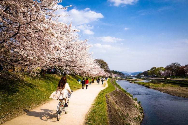 Kamogawa Lake Sakura