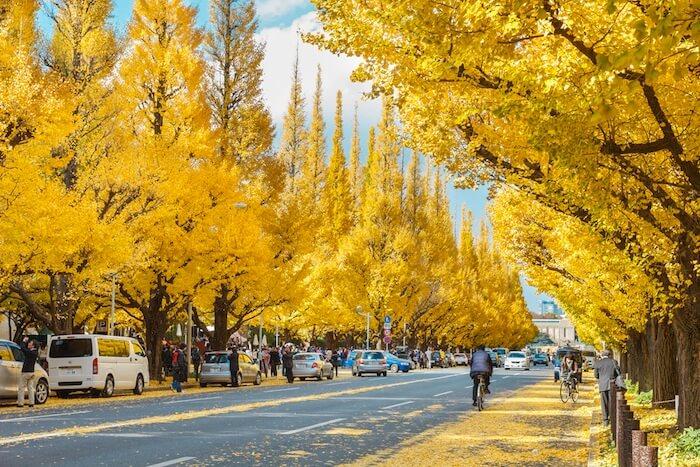 meiji-jingu-daun musim gugur tokyo