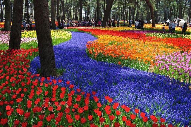 Sukashiyuri Lily Hitachi Side Park Jepang