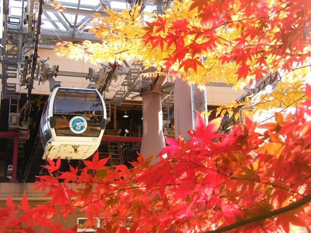 Hakone Ropeway musim autumn dan gugur