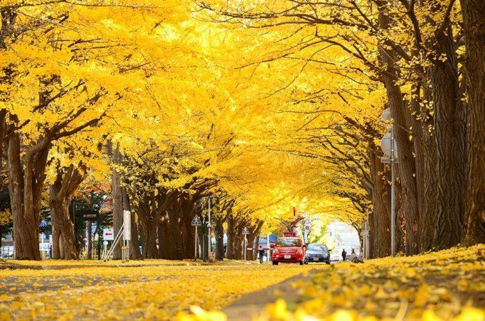 autumn by livingnomads.com
