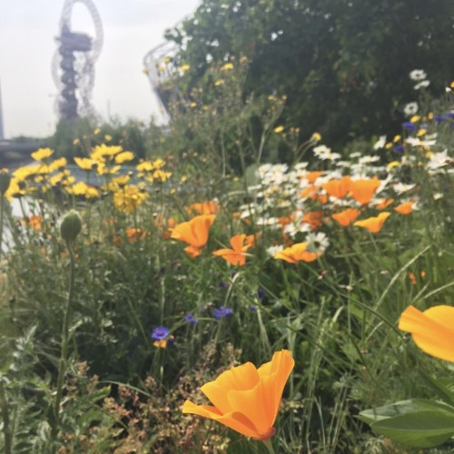 queen elizabeth olympic park tour spring flowers