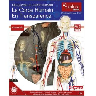 Le corps humain en transparence