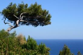 Capri (2)