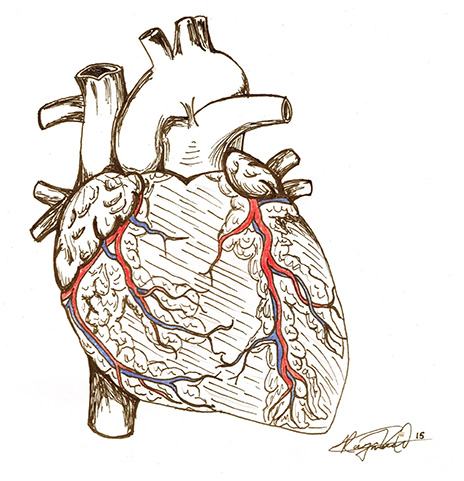 coronary anatomy diagram wiring 1992 gas club car golf cart anatomical sketch of the heart by raymond kwok : touro college osteopathic medicine | ...
