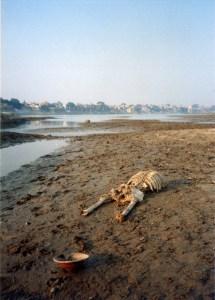 прибрежная полоса Ганга