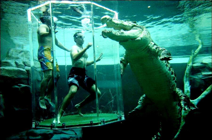 австралийский аттракцион с крокодилом