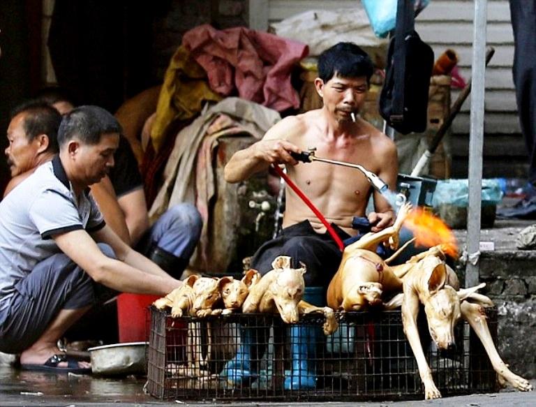 жарка собачьего мяса