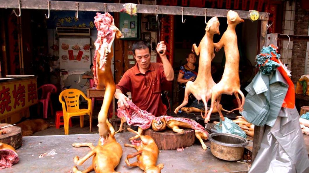 разделка собачьих туш на улице