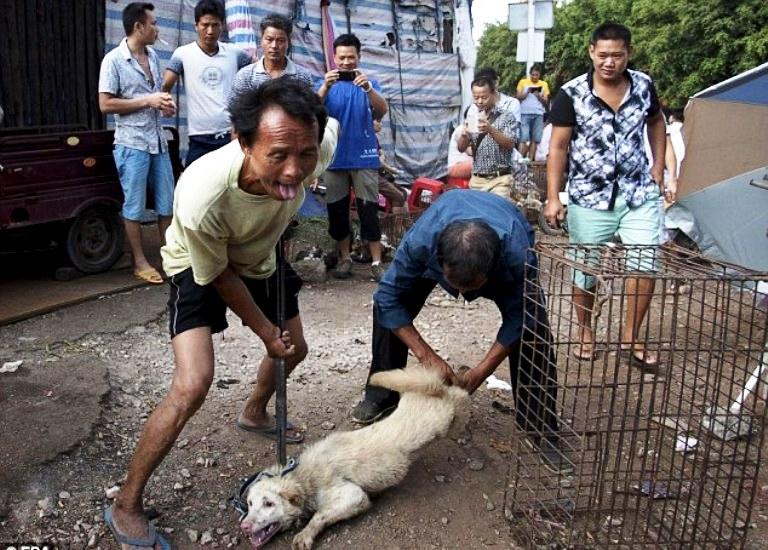 китайский дед с собакой