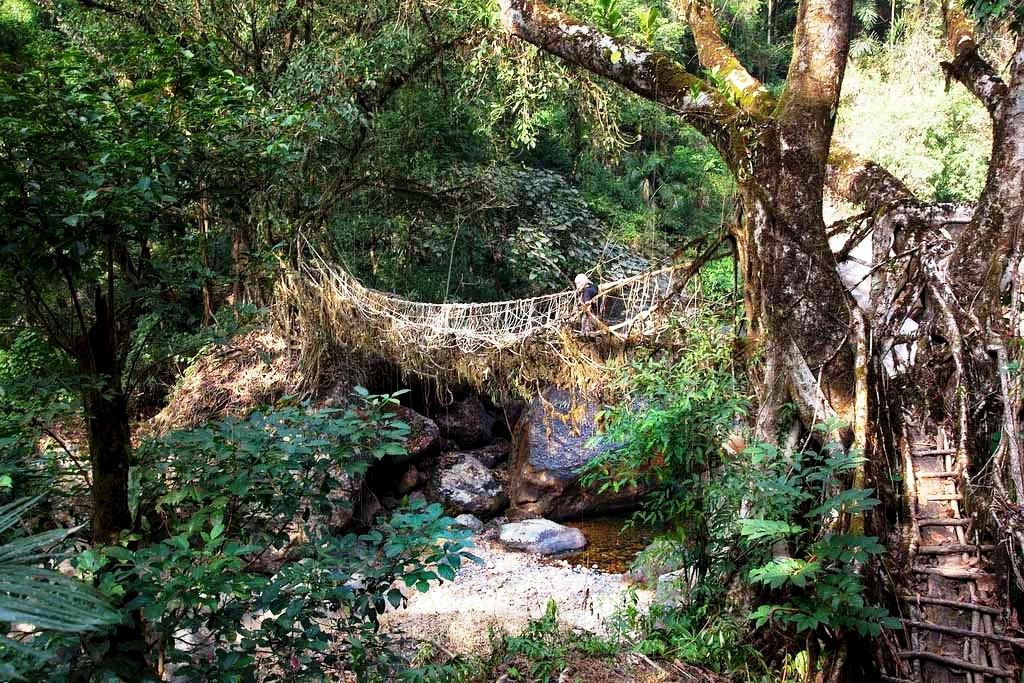 джунгли мегхалая