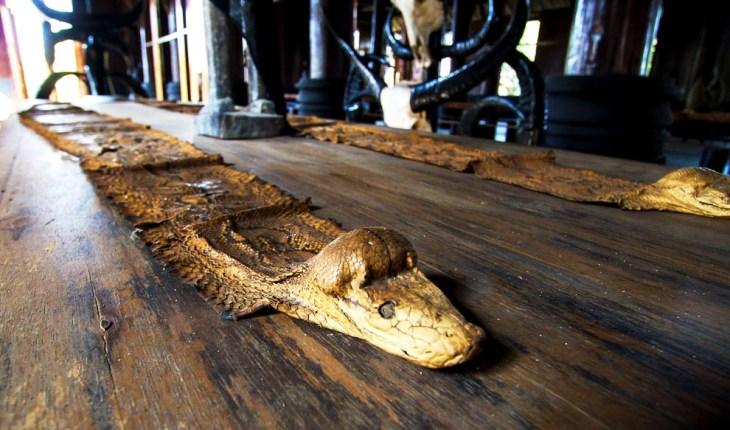 крокодилья шкура