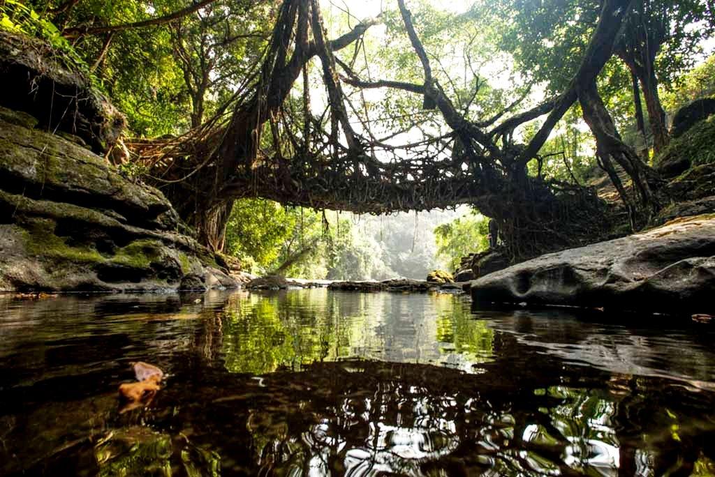 вид на живые мосты