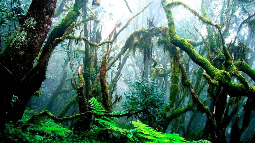 таинственный лес гарахонай