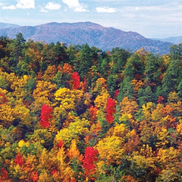 Gatlinburg In The Fall Wallpaper Tour Fall Foliage In Killington Vermont Gunther Tours