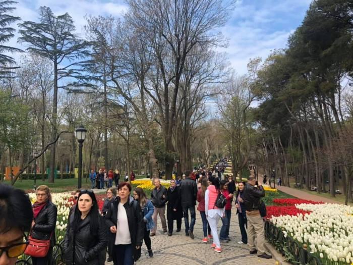 Tulip Season in Istanbul