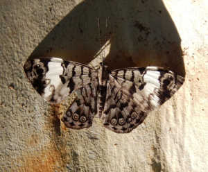 Butterfly in Ephesus