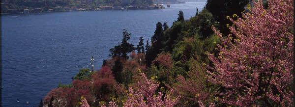 Judas Trees by Bosphorus