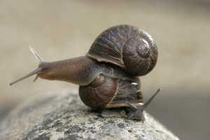 Snail in Ephesus