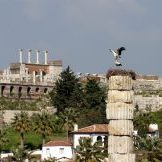 Storks of Ephesus on the column of Artemis Temple