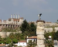 Storks of Ephesus