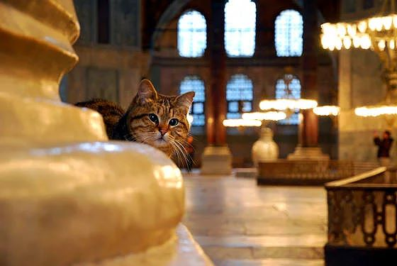 Gli-the-Hagia-Sophia-Cat-5