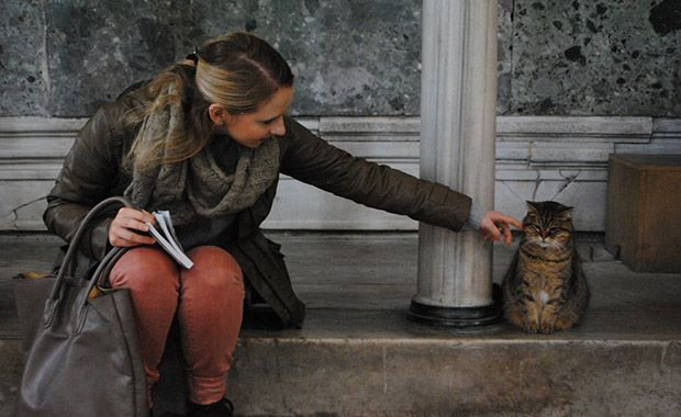 Gli-the-Hagia-Sophia-Cat-8