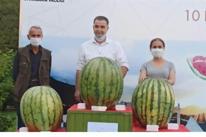 The Largest Watermelon in Turkey Exceeded 52 Kilos!