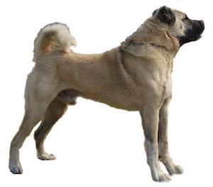 Sivas Kangal