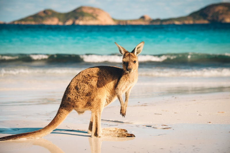 52 Fun Things to do in Australia  Cool  Unusual Activities
