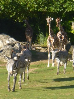 visite  zoo parc beauval