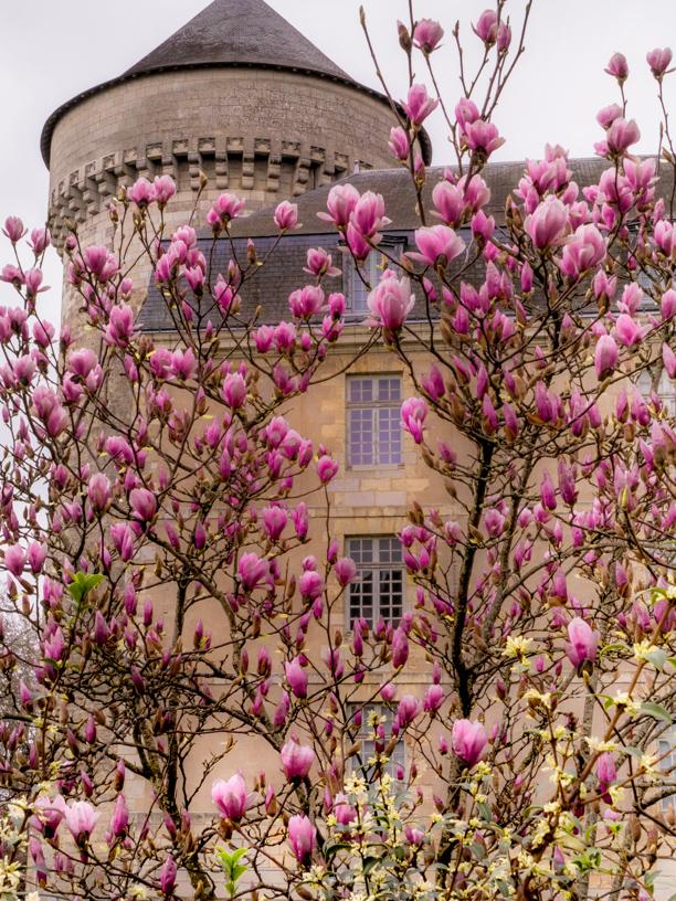 visiter Tours château magnolia printemps