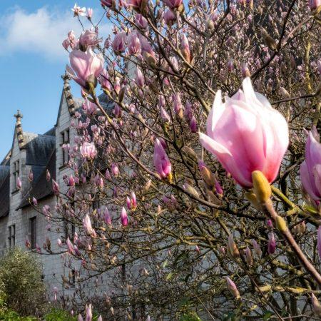 visiter Tours château magnolia