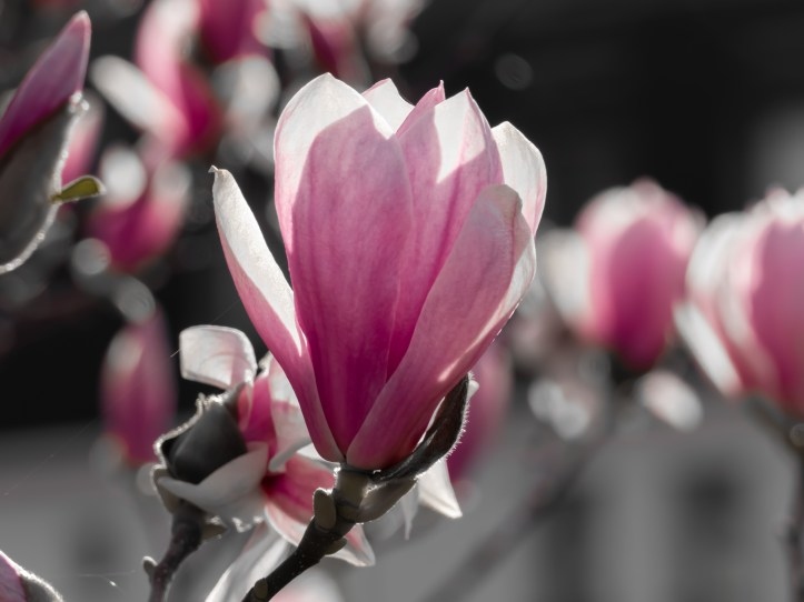 magnolia tours