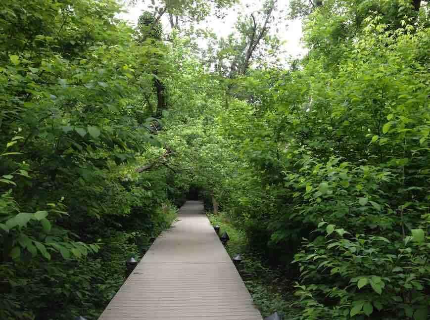 Theodore Roosevelt Island Swamp Trail